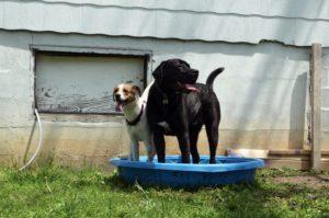 hunde planschbecken