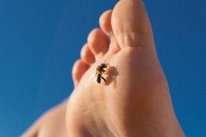 Bienenstiche vermeiden