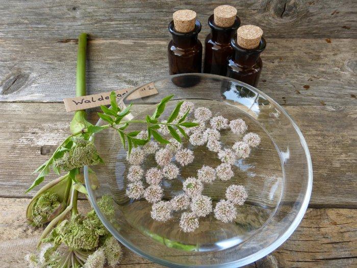 Blüten und Fläschchen