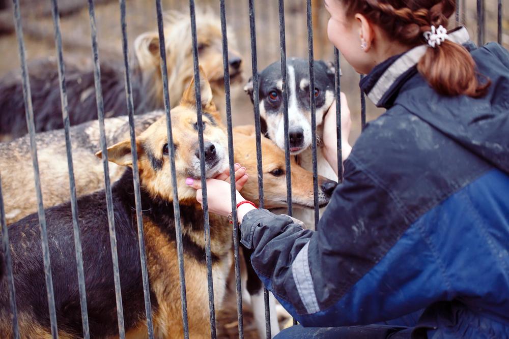 Ein Tiermarkt eignet sich nicht für die Hundeanschaffung