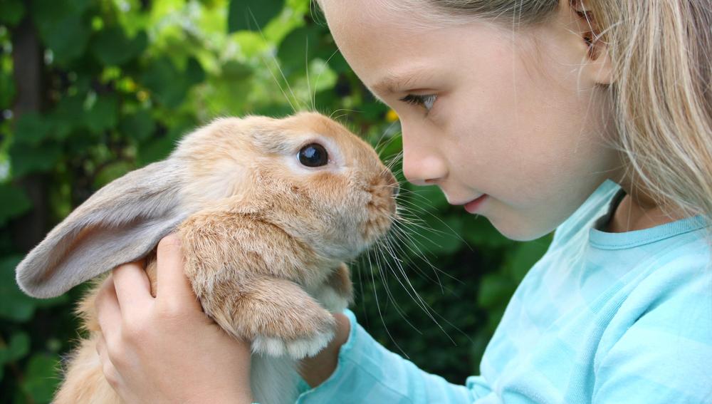 Haustiere für Kinder sind zum Beispiel Hasen