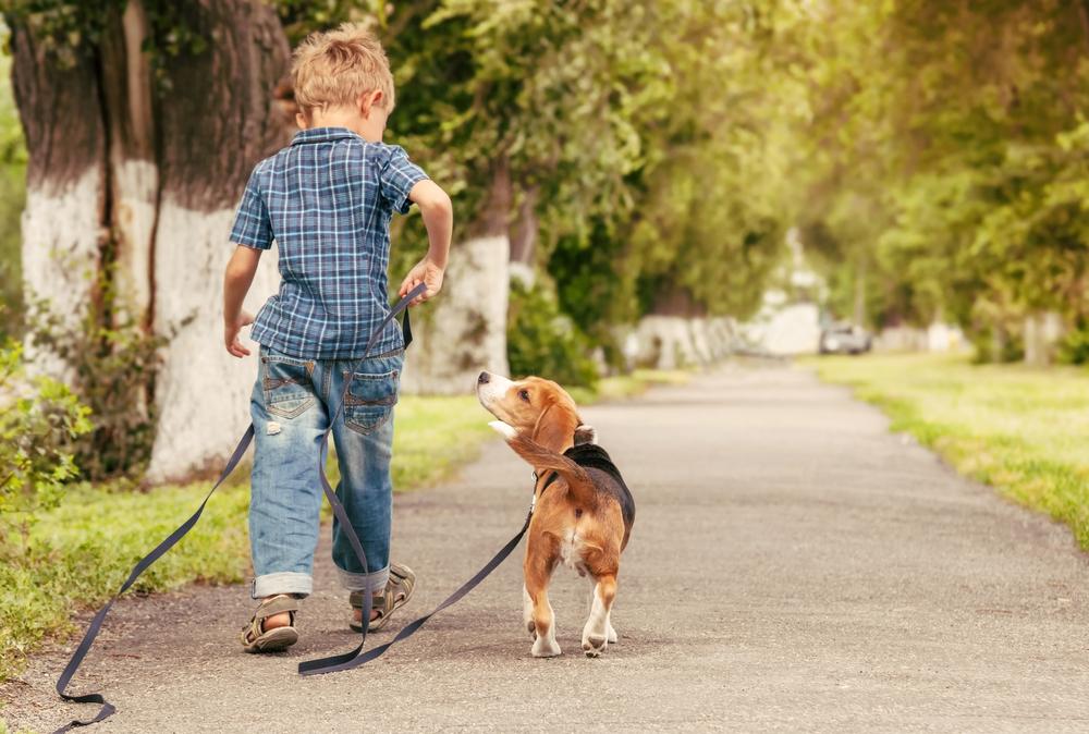 Pudel oder Beagles sind Familienhunde
