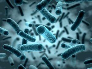 verschiedene bakterien