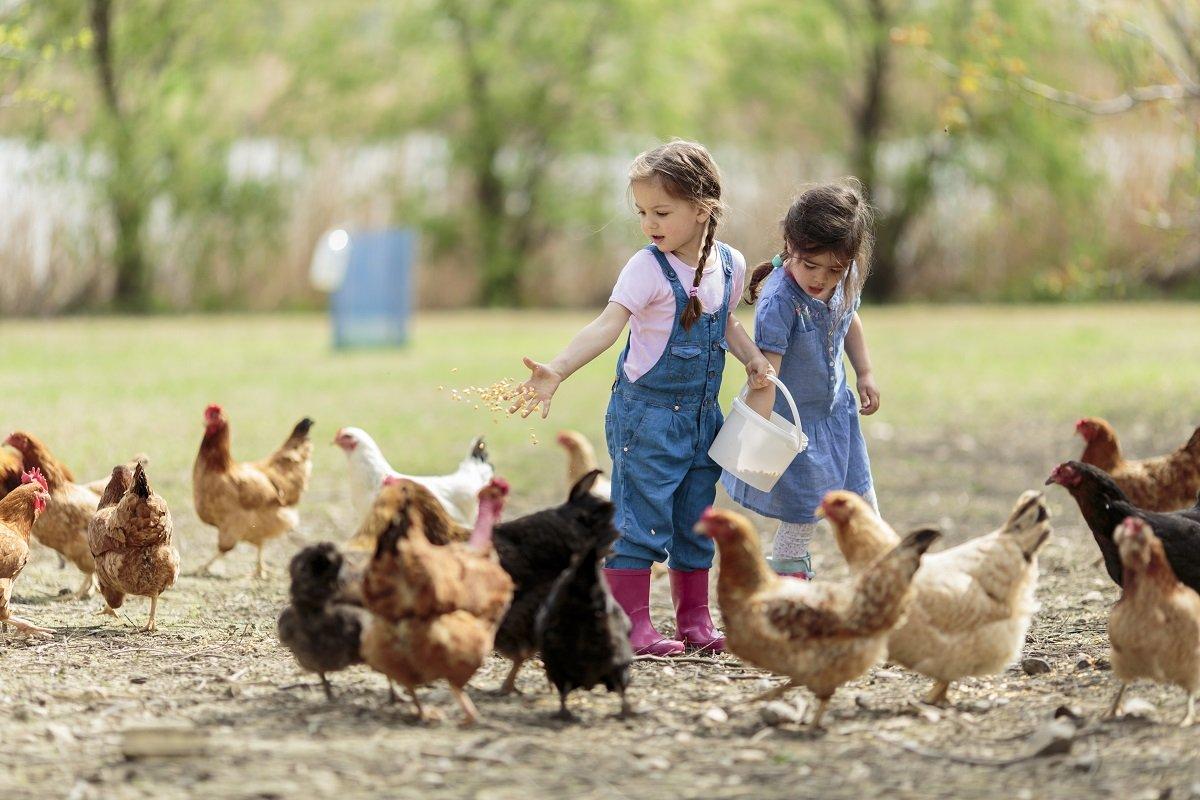 zwei Kinder stehen bei mehreren Hühnern