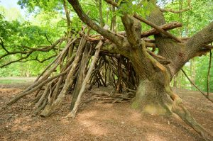 selbst gebaute Hütte im Wald