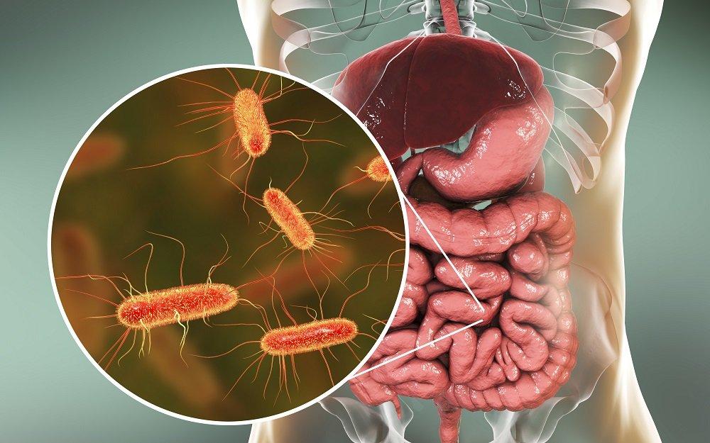 close up von bakterien im darm