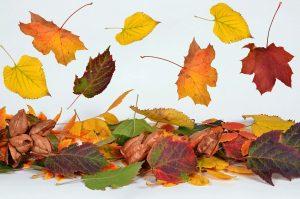 Herbst Im Kindergarten Ideen Für Die Kita Während Der