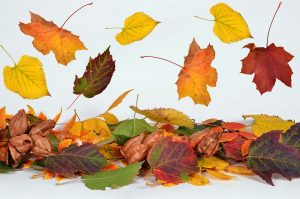 Memory im Herbst
