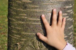 Kinderhand auf einem Baumstamm