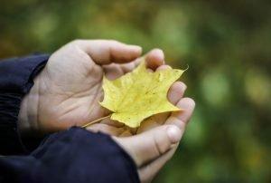 ein gelbes herbstblatt in den haenden eines kindes