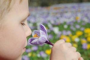 Junge riecht an einem Krokus