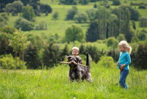 Kinder spielen mit einem Hund auf der Wiese