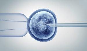 in-vitro-fertilisation
