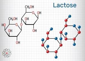 laktose molekuel