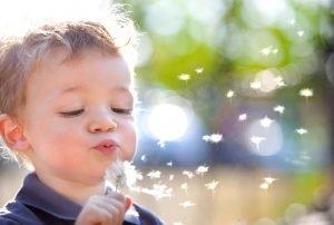 Kind pustet eine Pusteblume