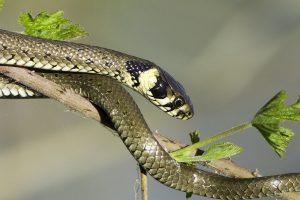 eine Schlange auf einem Ast