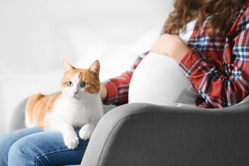 schwangere frau mit katze