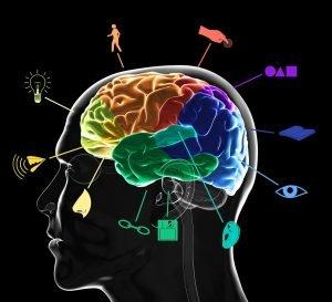 Funktionsbereiche des Gehirns
