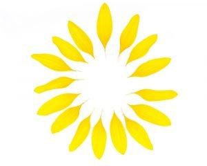 blaetter einer sonnenblume