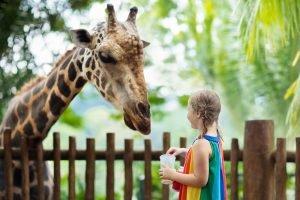 ein kind steht vor einer giraffe
